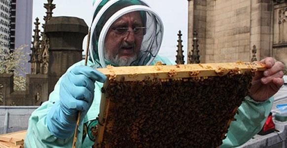 Bee Coordinator