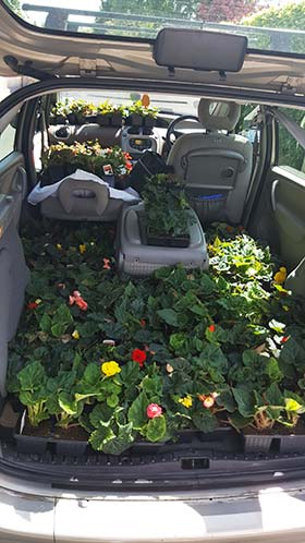 Car filled with flowers