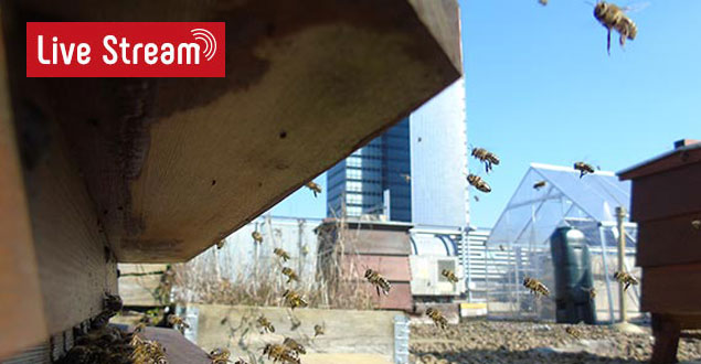 Bee Hive Live Stream