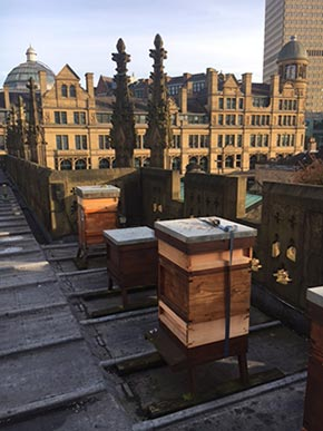 Cathedral's Heavenly Honey Bee Hive
